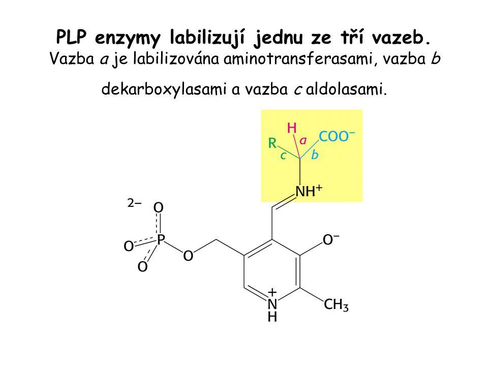 PLP enzymy labilizují jednu ze tří vazeb