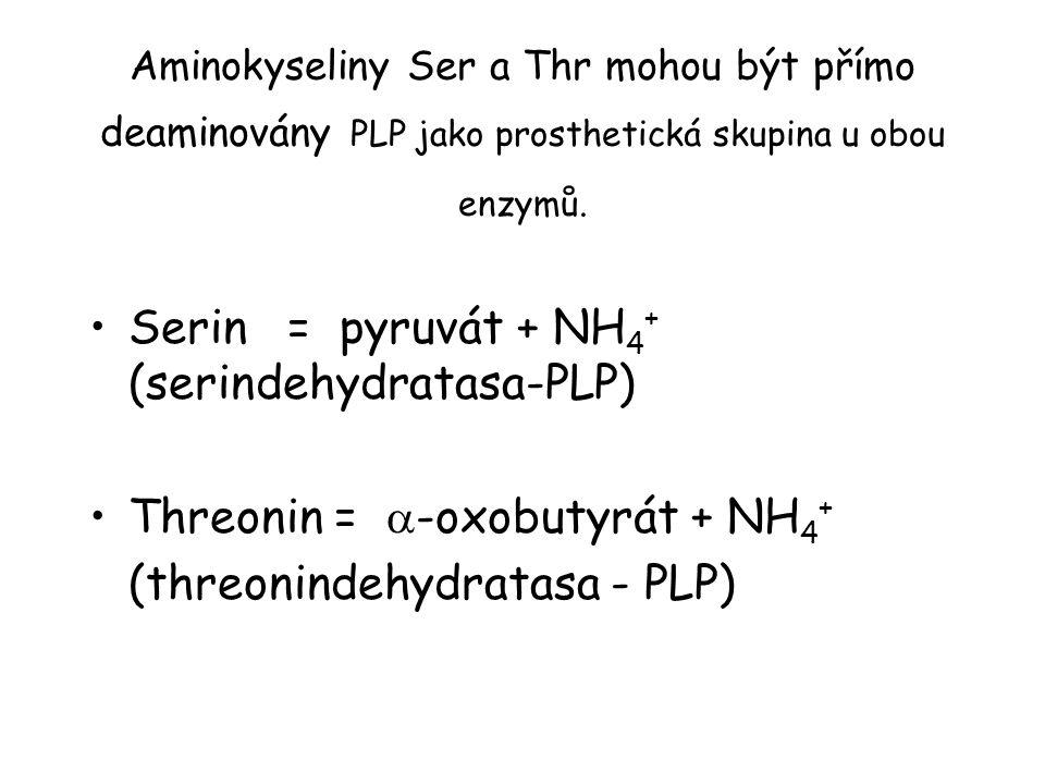 Serin = pyruvát + NH4+ (serindehydratasa-PLP)