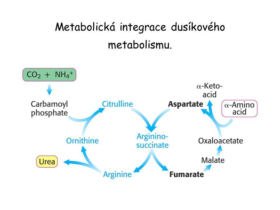 Metabolická integrace dusíkového metabolismu.