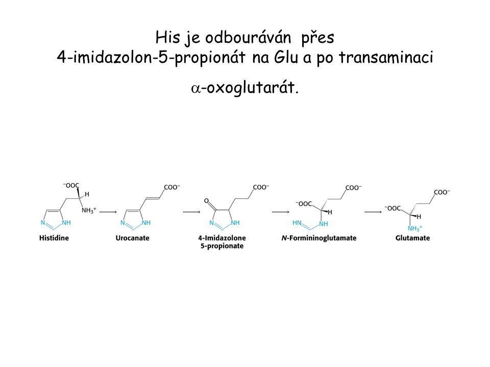 His je odbouráván přes 4-imidazolon-5-propionát na Glu a po transaminaci a-oxoglutarát.