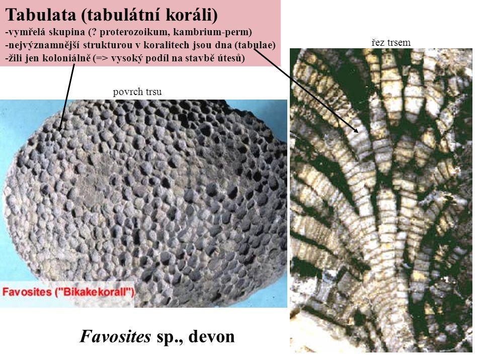 Tabulata (tabulátní koráli)