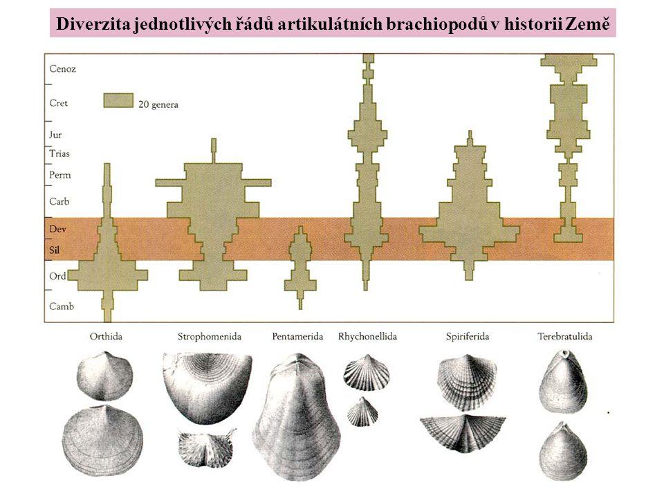 Diverzita jednotlivých řádů artikulátních brachiopodů v historii Země