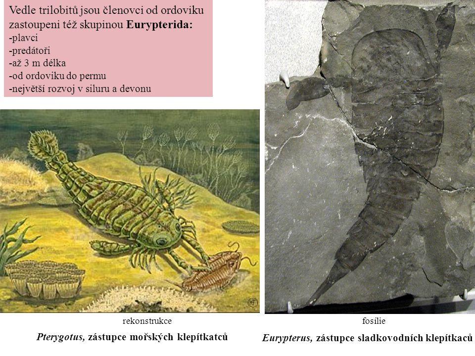 Vedle trilobitů jsou členovci od ordoviku