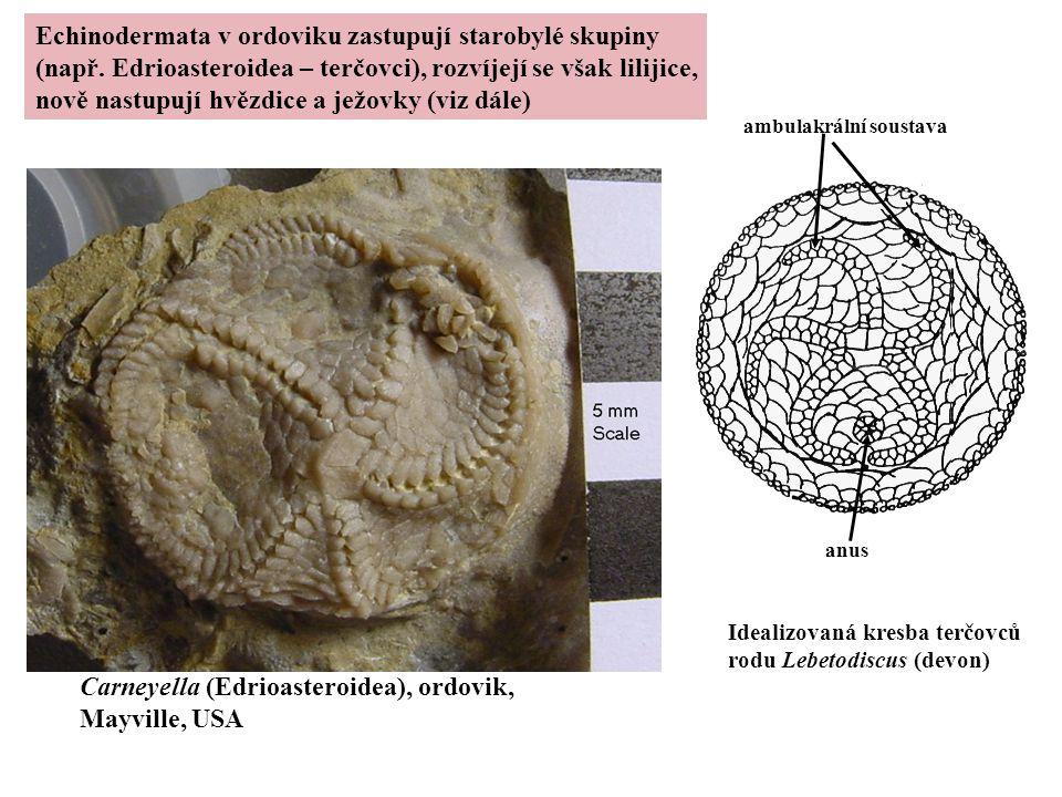 Echinodermata v ordoviku zastupují starobylé skupiny