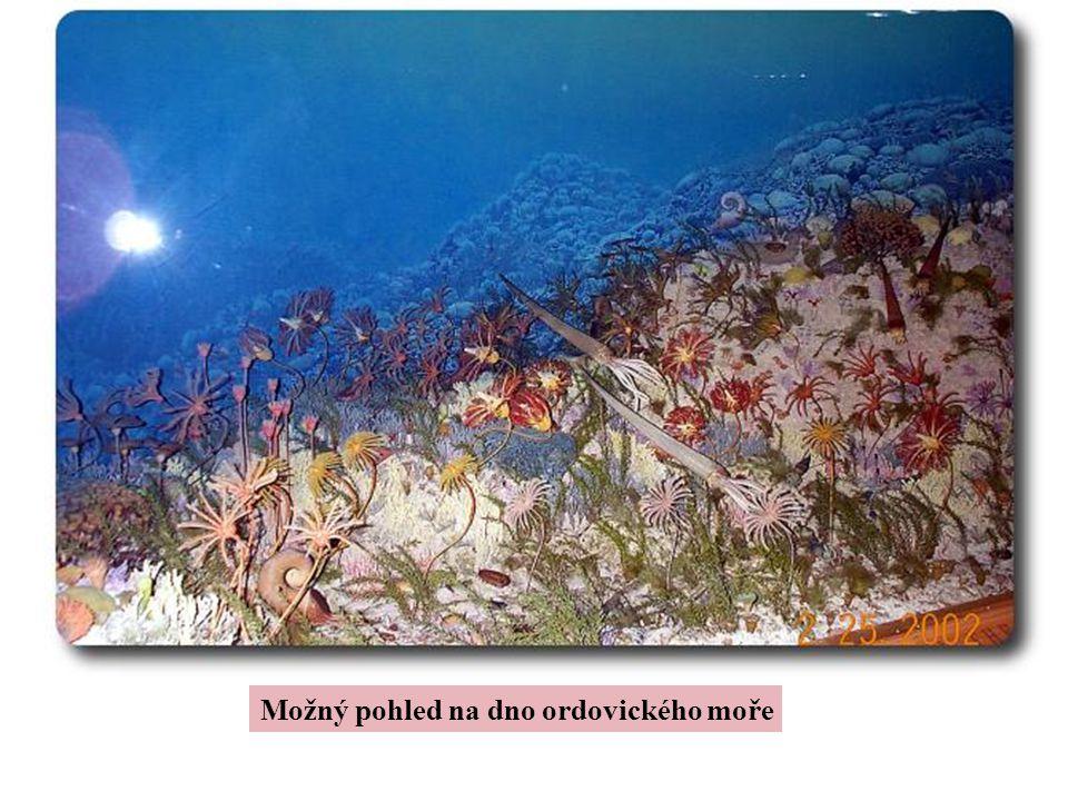 Možný pohled na dno ordovického moře