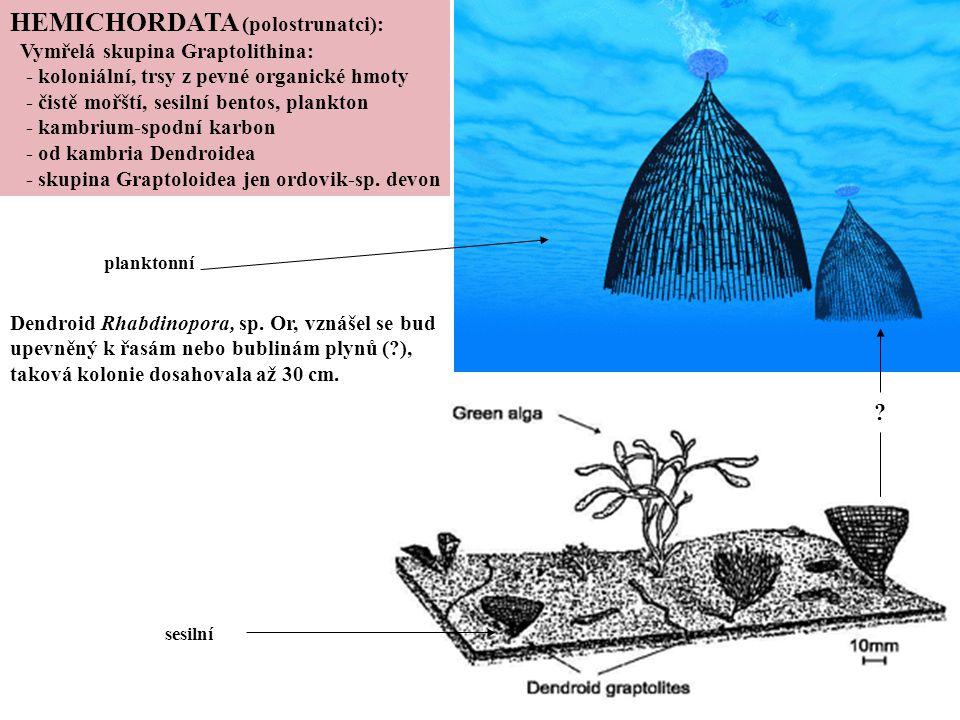 HEMICHORDATA (polostrunatci):