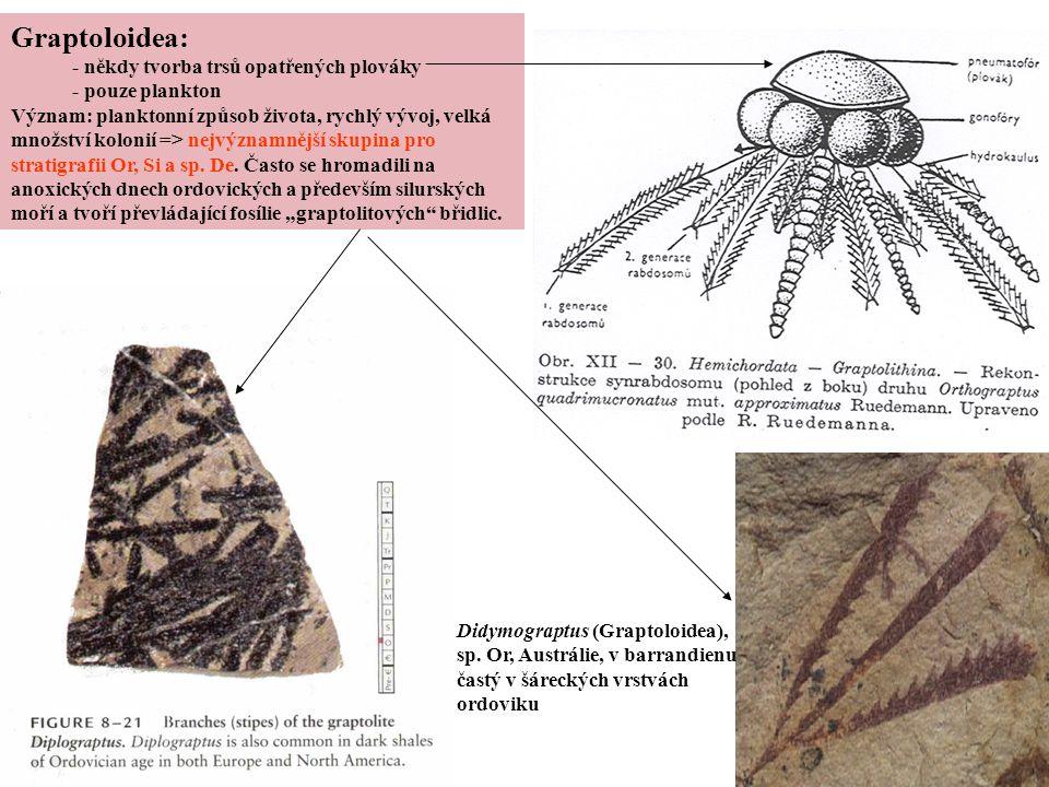 Graptoloidea: - někdy tvorba trsů opatřených plováky - pouze plankton