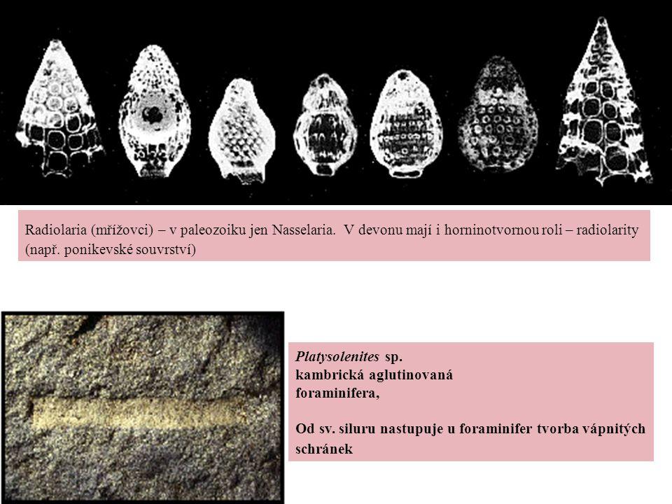 Radiolaria (mřížovci) – v paleozoiku jen Nasselaria
