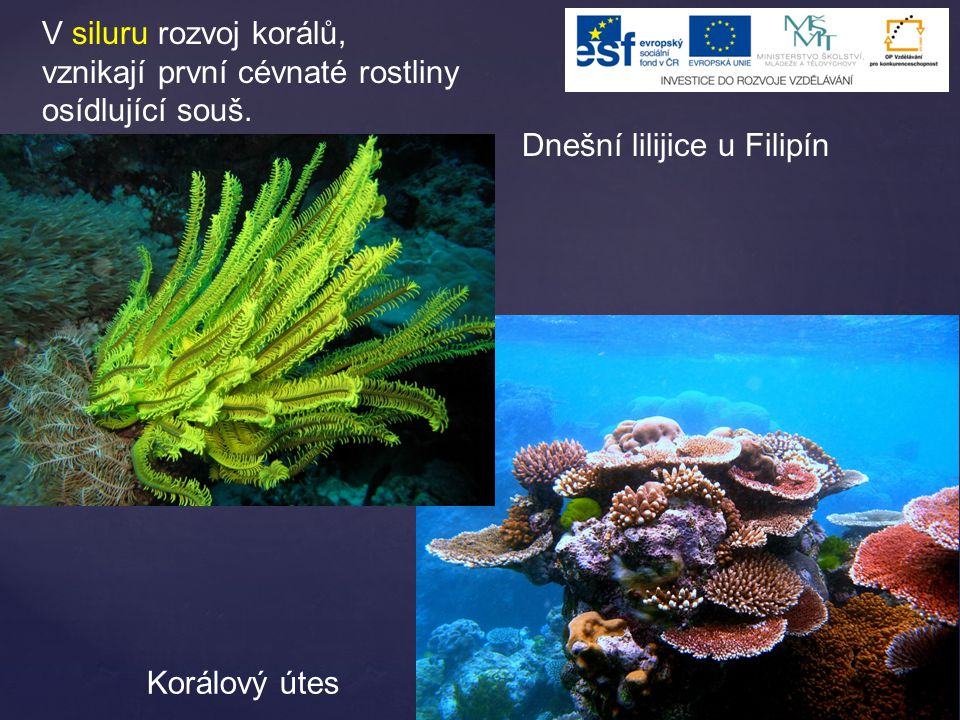 V siluru rozvoj korálů, vznikají první cévnaté rostliny osídlující souš.
