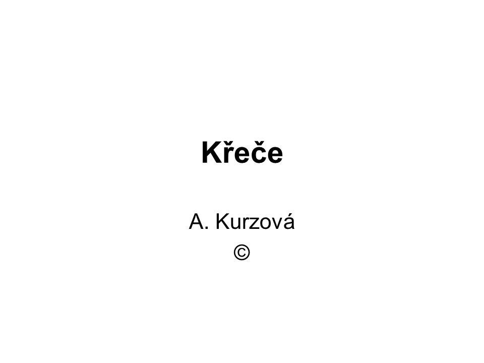 Křeče A. Kurzová ©