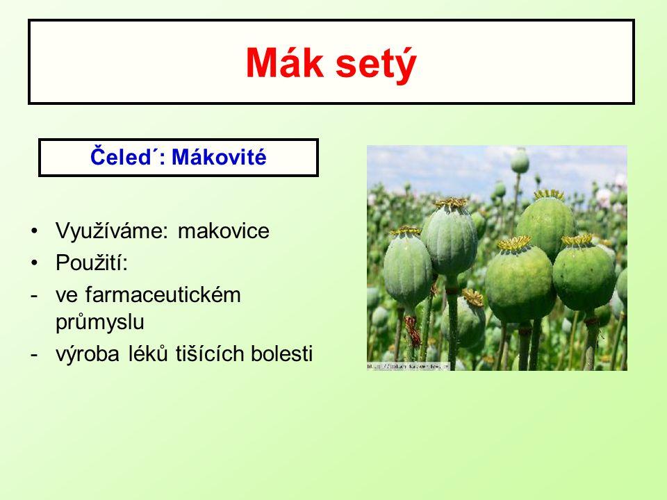 Mák setý Čeled´: Mákovité Využíváme: makovice Použití: