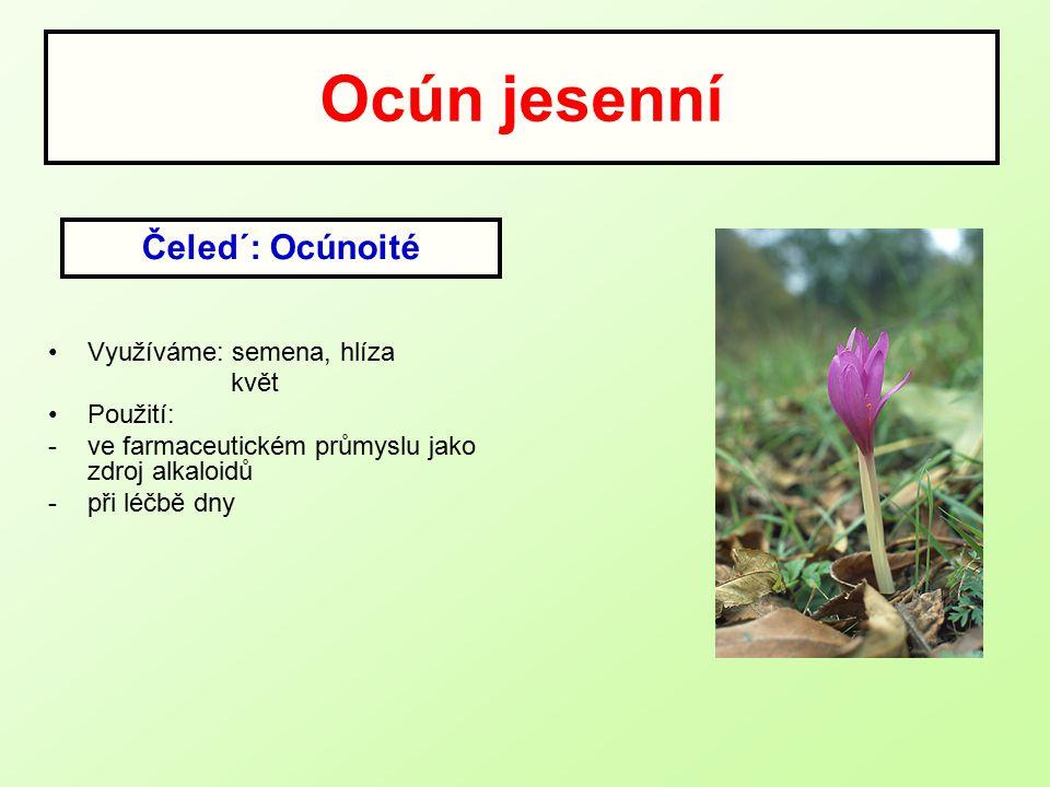 Ocún jesenní Čeled´: Ocúnoité Využíváme: semena, hlíza květ Použití: