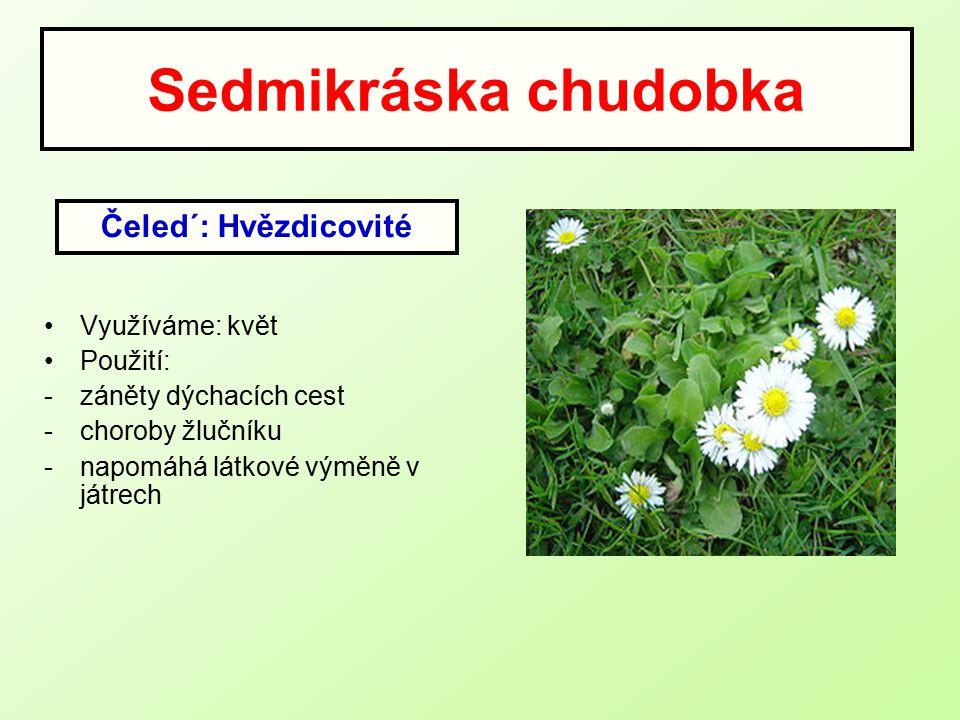 Sedmikráska chudobka Čeled´: Hvězdicovité Využíváme: květ Použití: