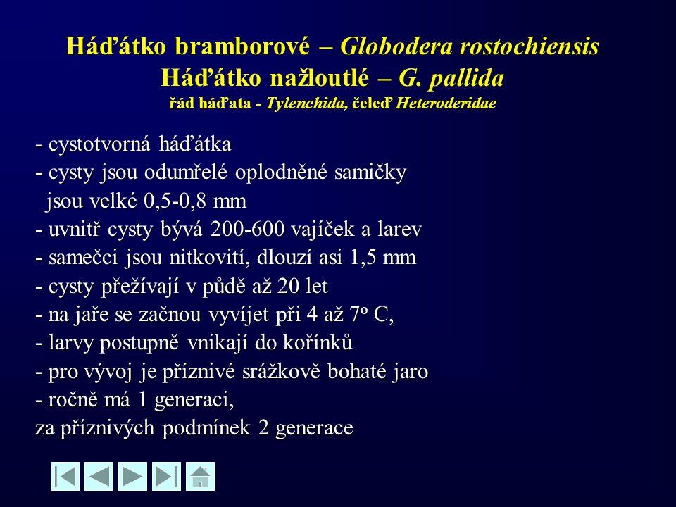 Háďátko bramborové – Globodera rostochiensis Háďátko nažloutlé – G