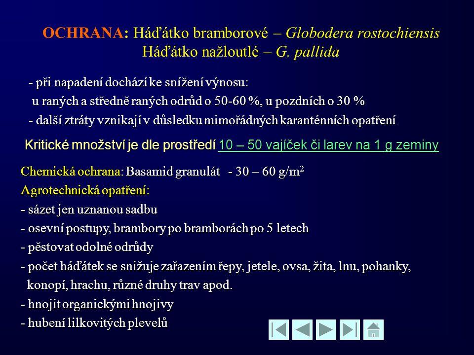 OCHRANA: Háďátko bramborové – Globodera rostochiensis Háďátko nažloutlé – G. pallida