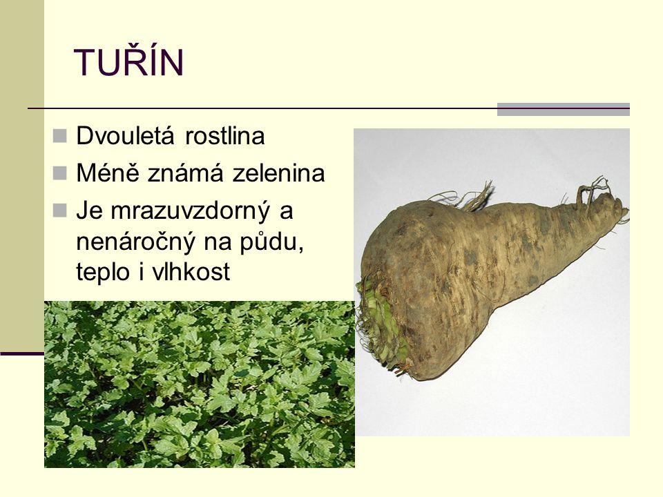 TUŘÍN Dvouletá rostlina Méně známá zelenina