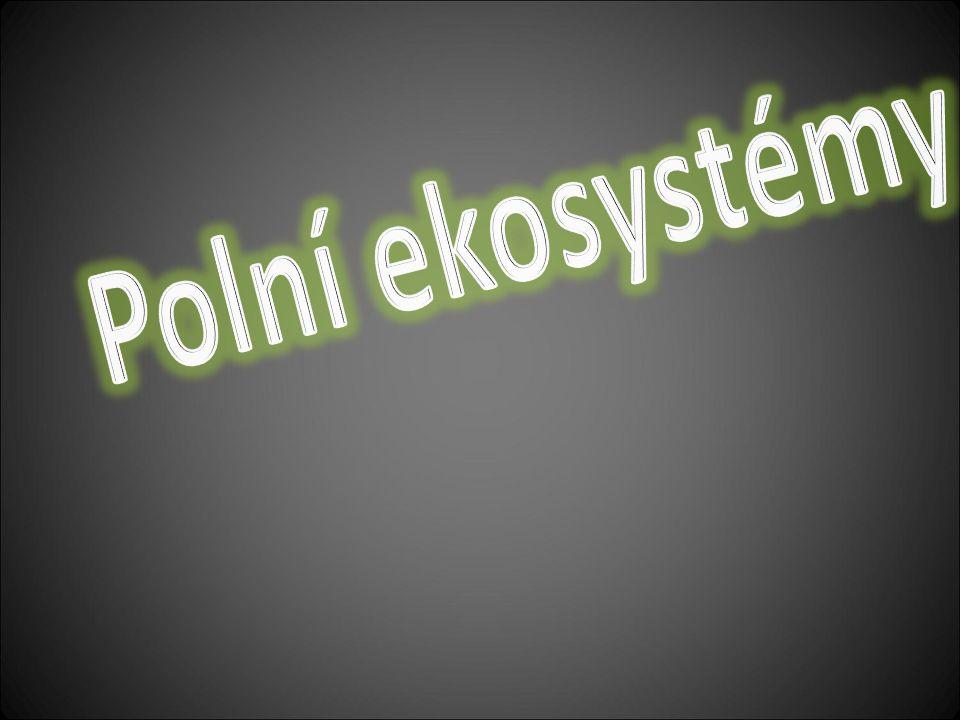 Polní ekosystémy