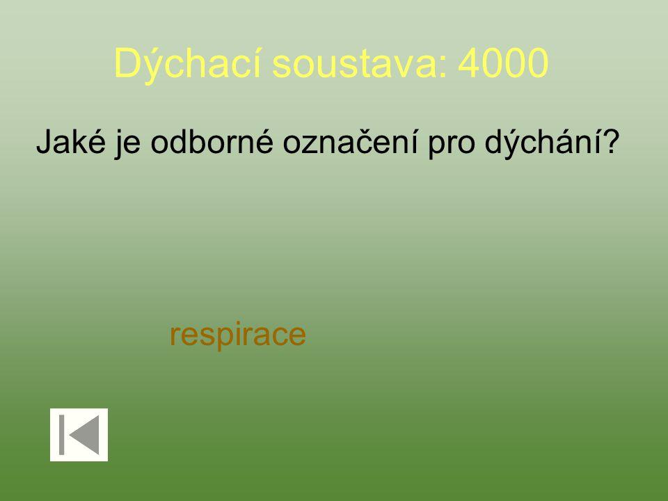 Dýchací soustava: 4000 Jaké je odborné označení pro dýchání respirace