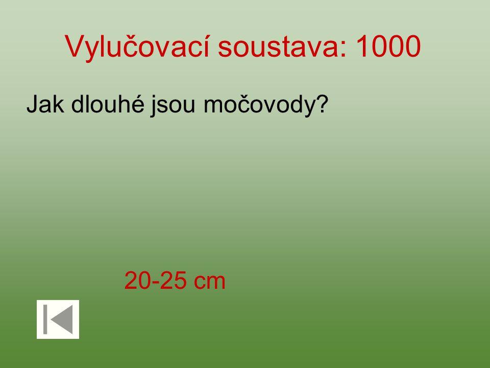 Vylučovací soustava: 1000 Jak dlouhé jsou močovody 20-25 cm