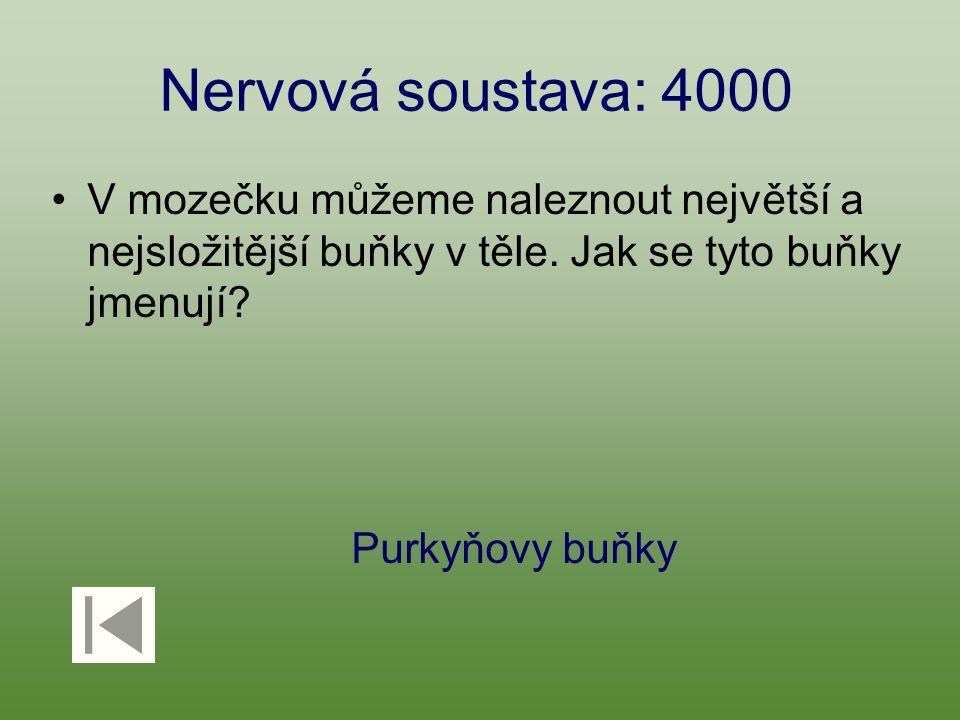 Nervová soustava: 4000 V mozečku můžeme naleznout největší a nejsložitější buňky v těle. Jak se tyto buňky jmenují