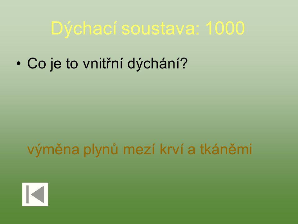 Dýchací soustava: 1000 Co je to vnitřní dýchání