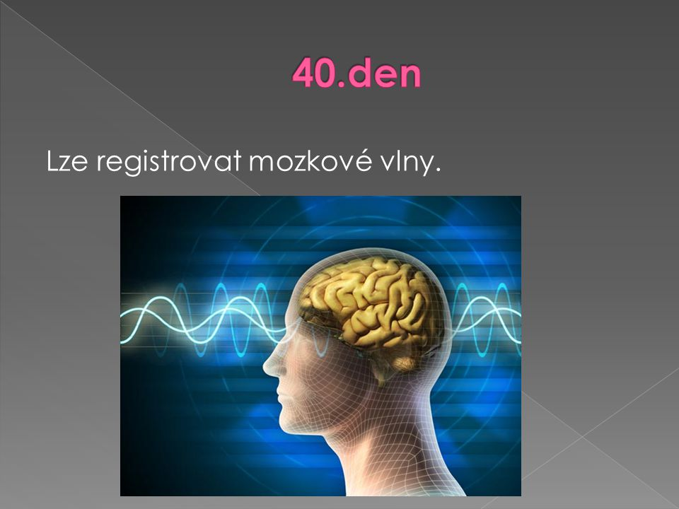 40.den Lze registrovat mozkové vlny.