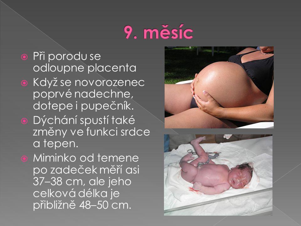 9. měsíc Při porodu se odloupne placenta