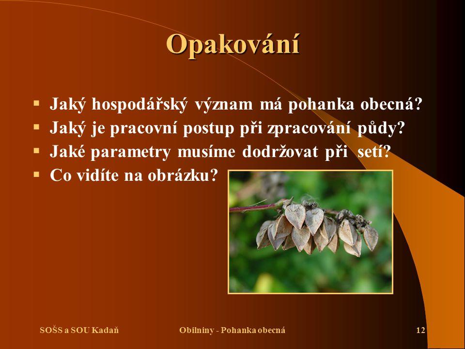 Obilniny - Pohanka obecná