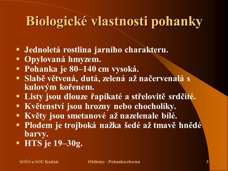 Biologické vlastnosti pohanky