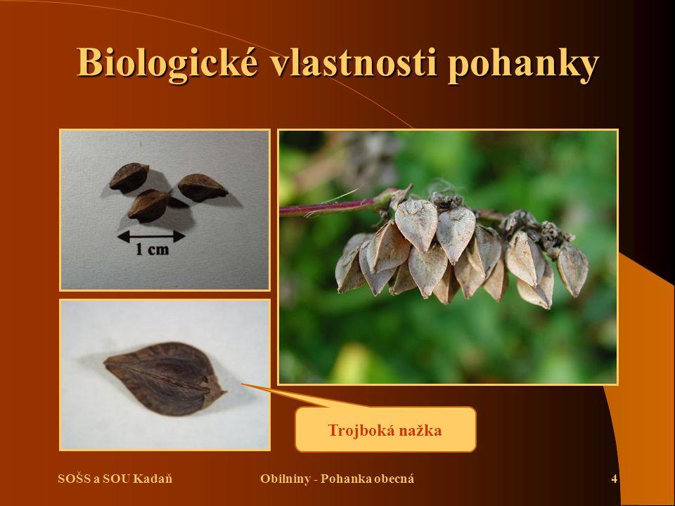 Biologické vlastnosti pohanky Obilniny - Pohanka obecná