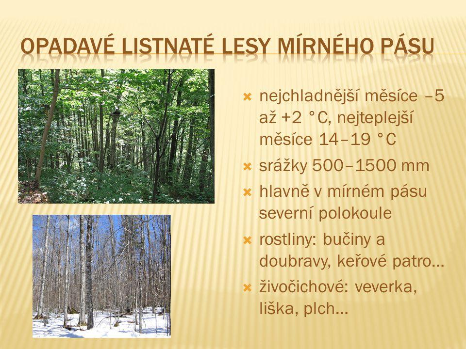 Opadavé listnaté lesy mírného pásu