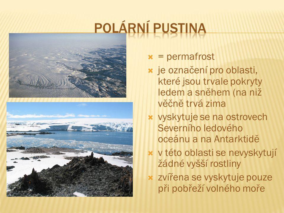 Polární pustina = permafrost