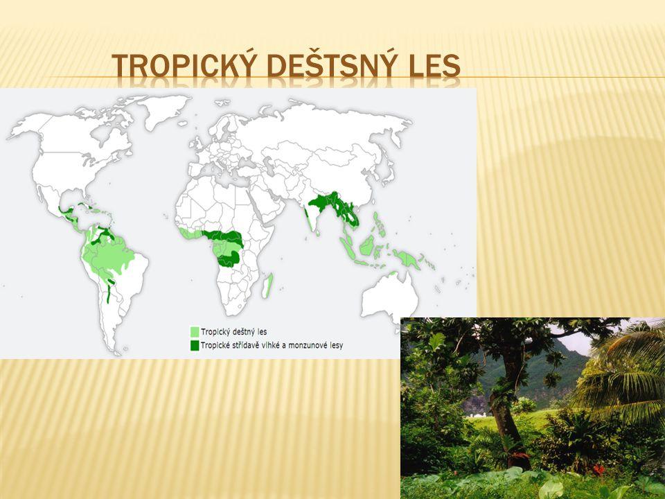 Tropický deštsný les