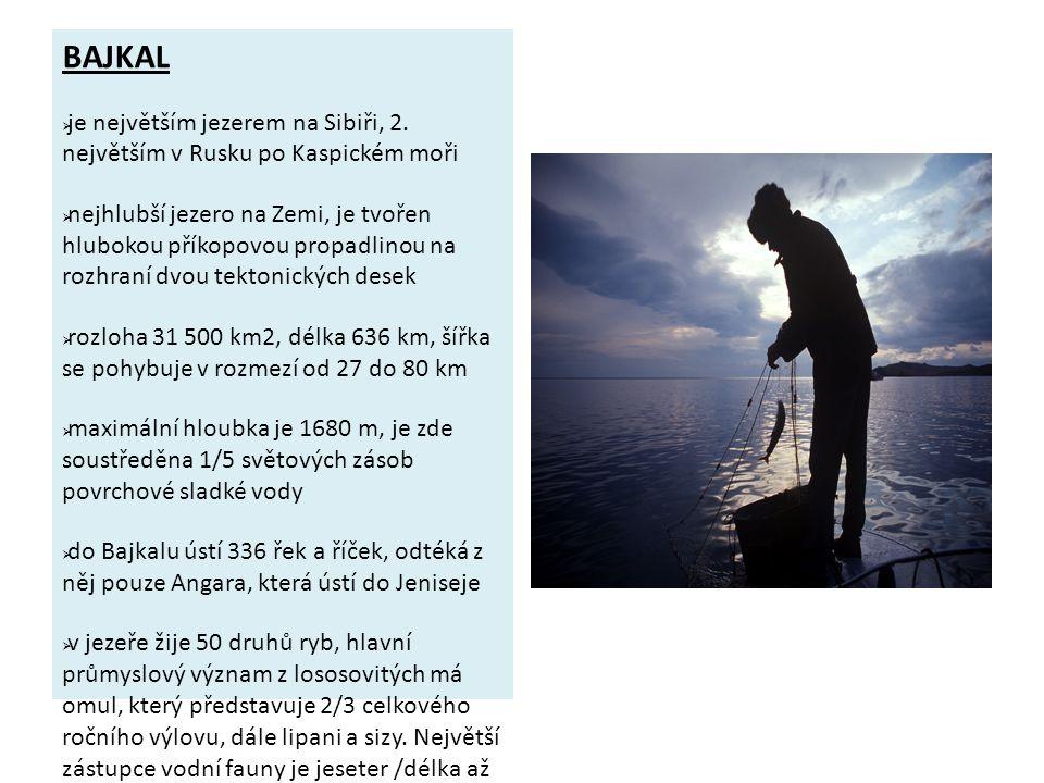 BAJKAL je největším jezerem na Sibiři, 2. největším v Rusku po Kaspickém moři.