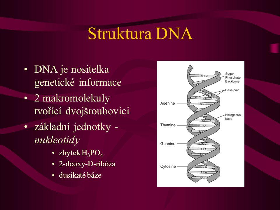 Struktura DNA DNA je nositelka genetické informace