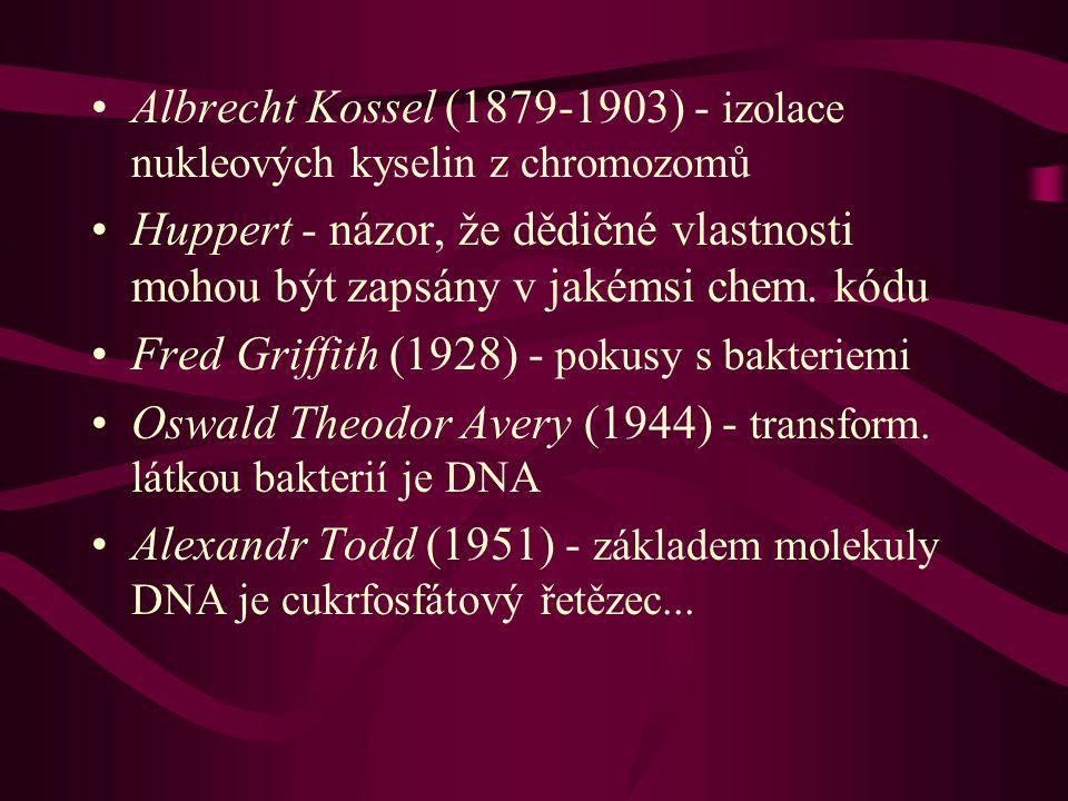 Albrecht Kossel (1879-1903) - izolace nukleových kyselin z chromozomů