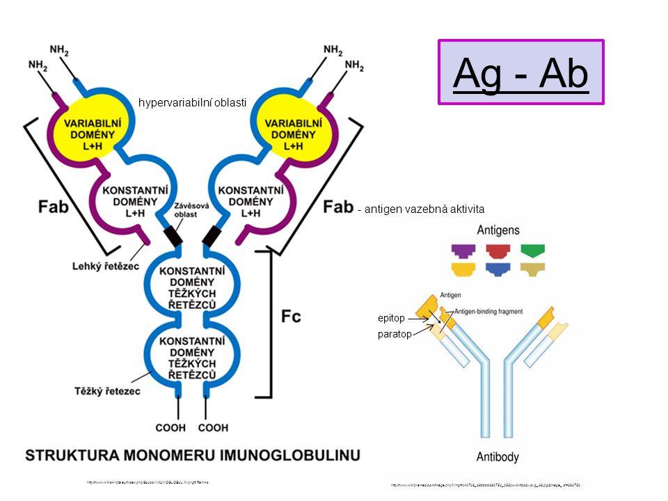Ag - Ab hypervariabilní oblasti - antigen vazebná aktivita epitop