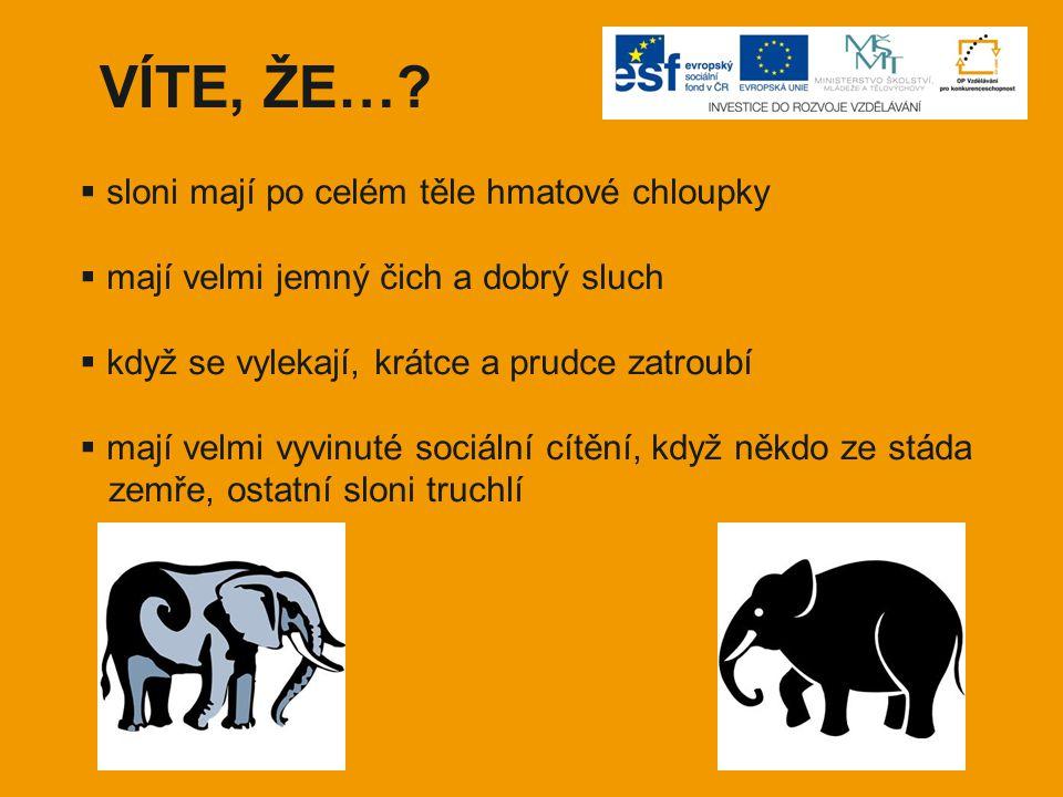VÍTE, ŽE… sloni mají po celém těle hmatové chloupky