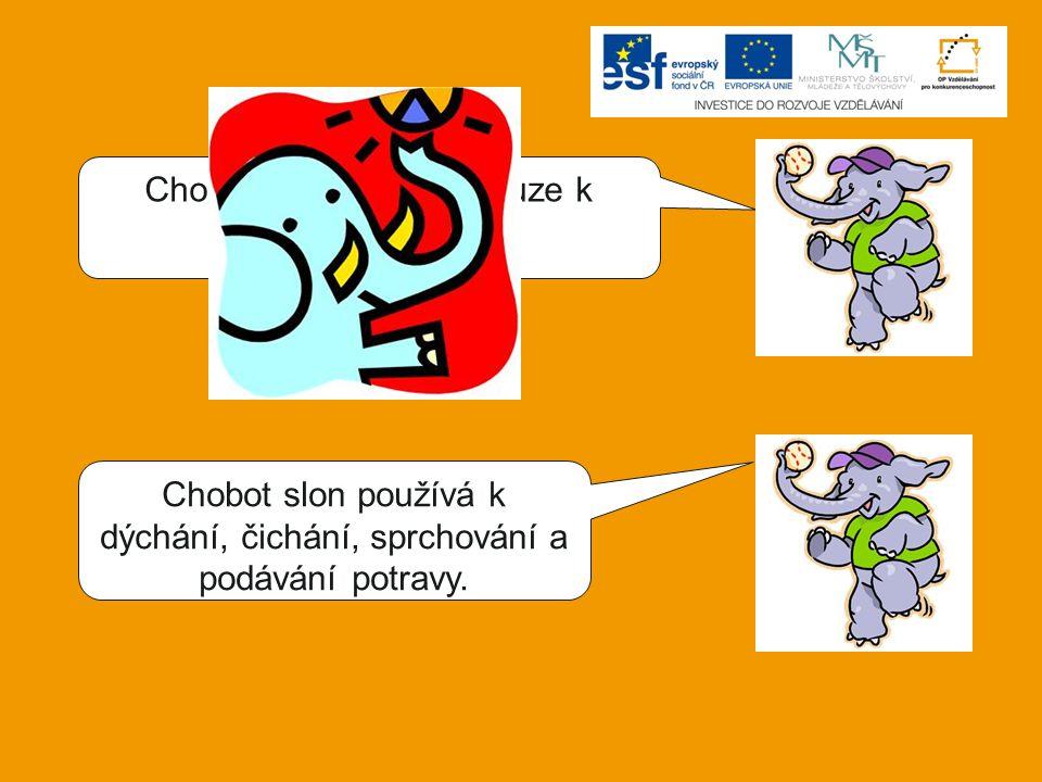 Chobot slon používá pouze k podávání potravy.