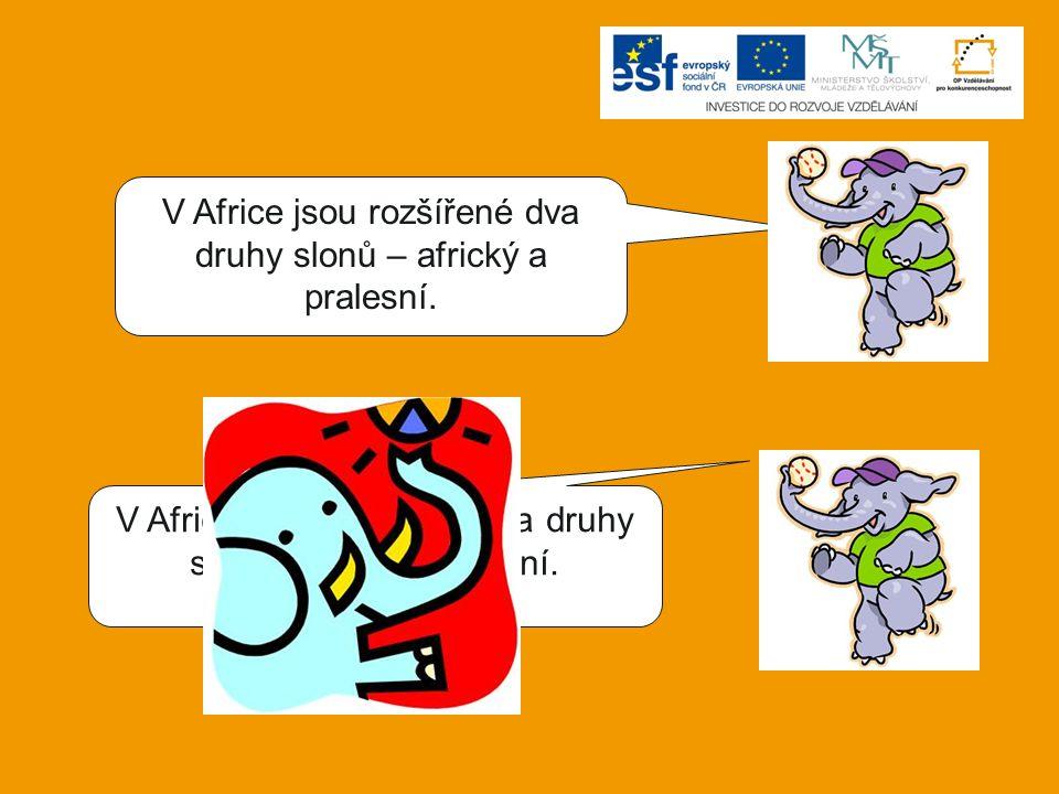 V Africe jsou rozšířené dva druhy slonů – africký a pralesní.