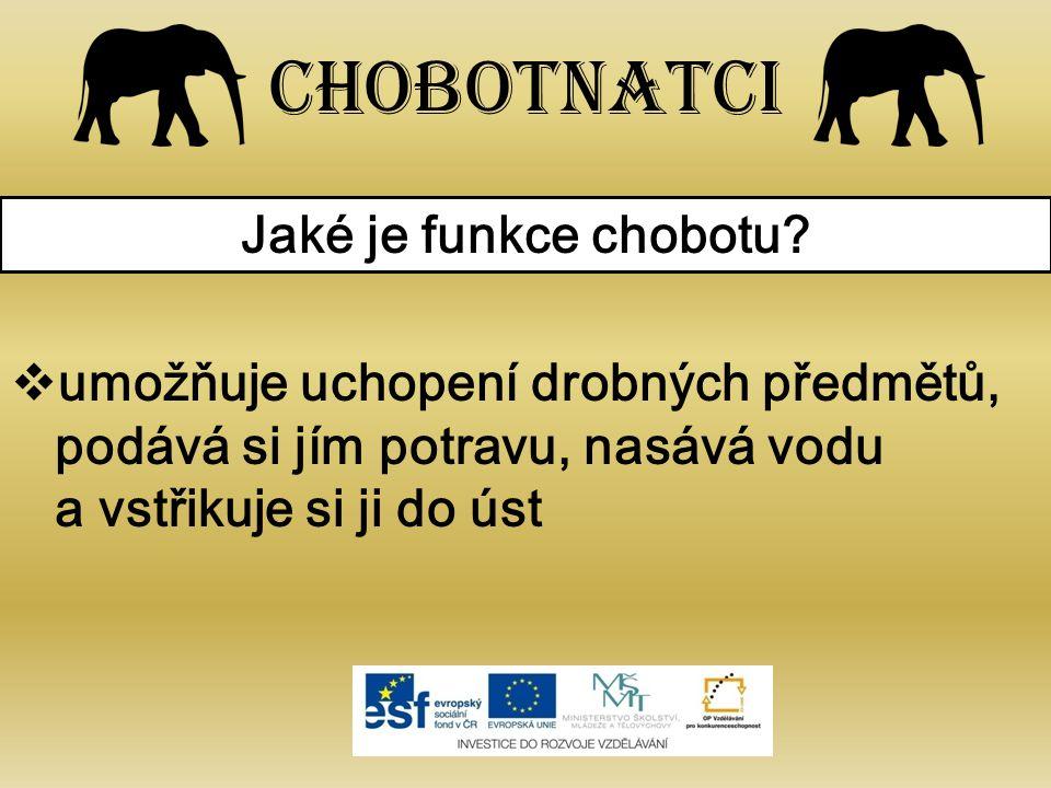 Chobotnatci Jaké je funkce chobotu