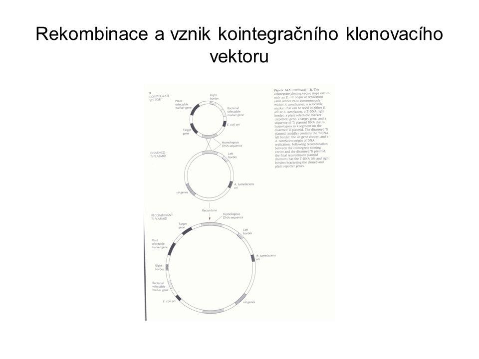 Rekombinace a vznik kointegračního klonovacího vektoru