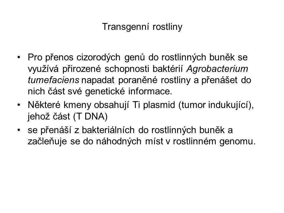 Transgenní rostliny