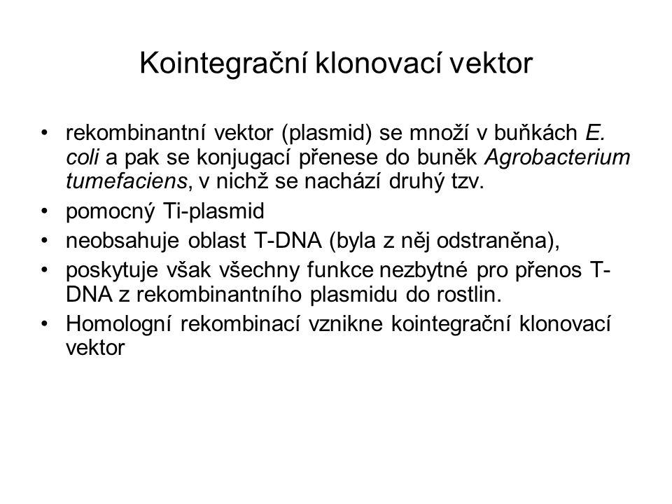 Kointegrační klonovací vektor