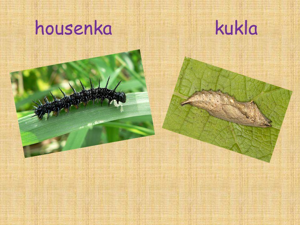 housenka kukla