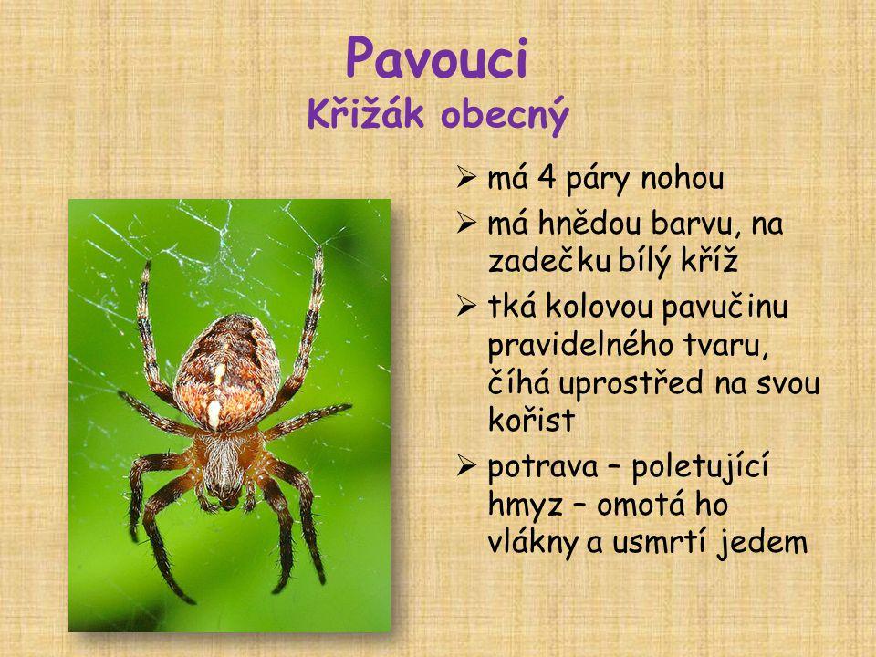 Pavouci Křižák obecný má 4 páry nohou