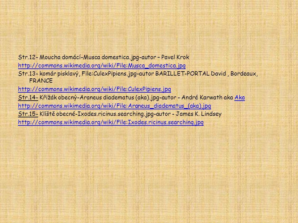 Str. 12- Moucha domácí-Musca domestica