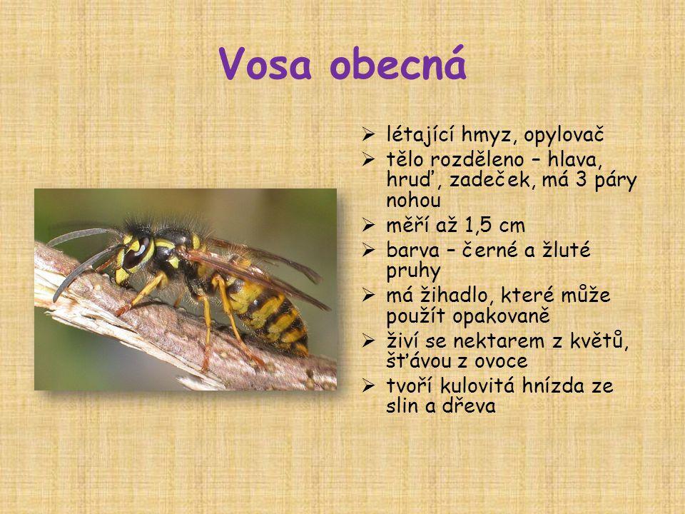 Vosa obecná létající hmyz, opylovač