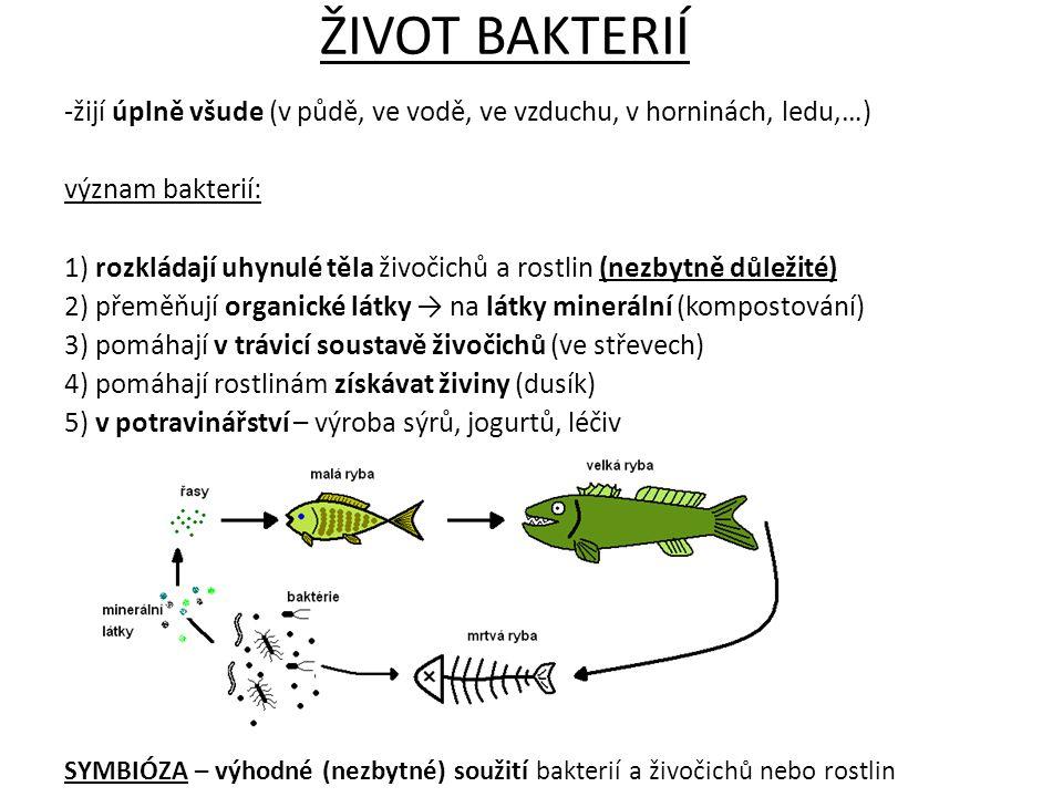 ŽIVOT BAKTERIÍ -žijí úplně všude (v půdě, ve vodě, ve vzduchu, v horninách, ledu,…) význam bakterií: