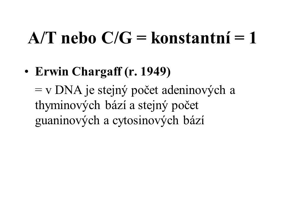A/T nebo C/G = konstantní = 1